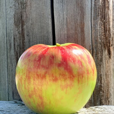 Apple Variety September 2020