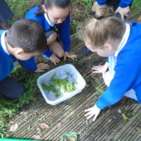 Nightingales Go Pond Dipping!