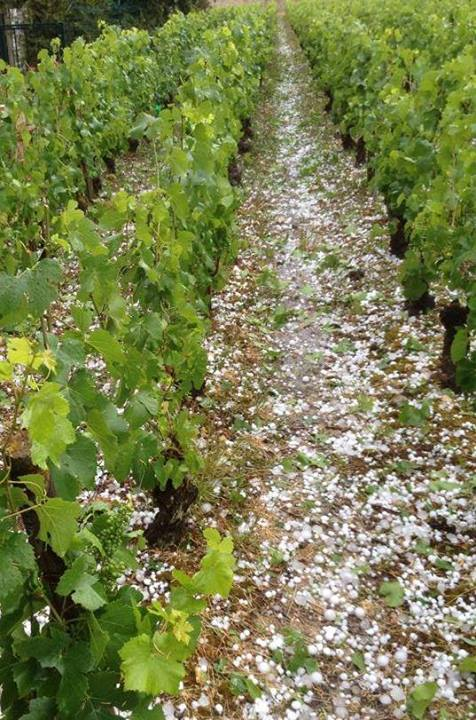 Hail in Volnay, June 2014, photo from Daniel Etienne Defaix
