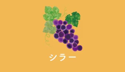 ふたつの顔を持つ品種、シラー|特徴とおすすめワイン