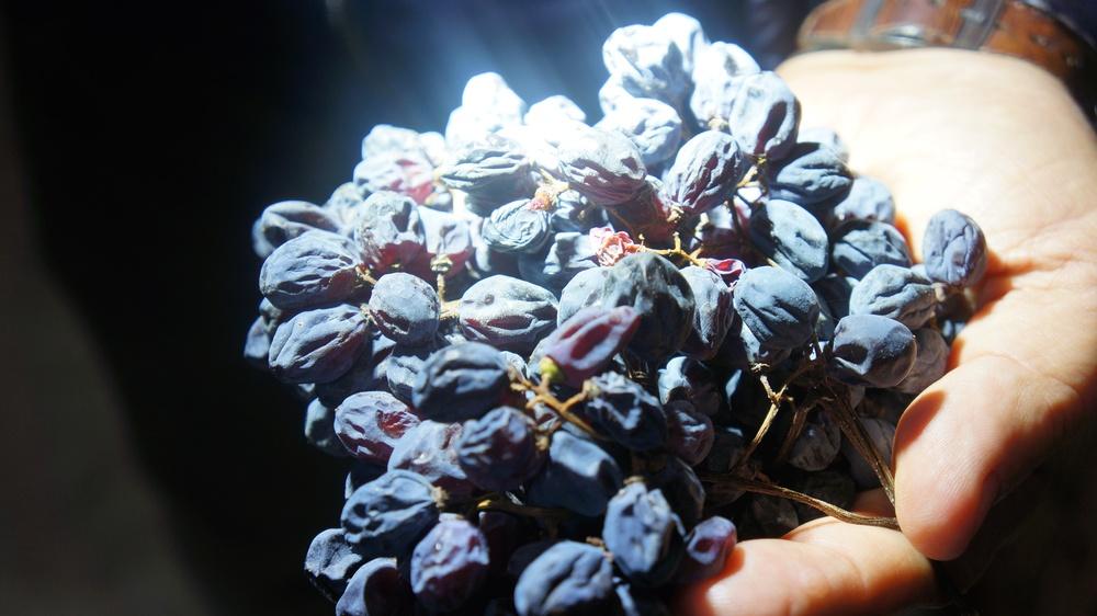 valpolicellla ripasso grapes