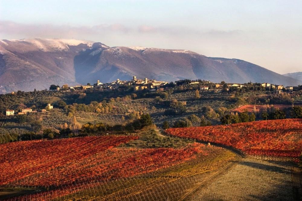 montefalco vineyards 2018