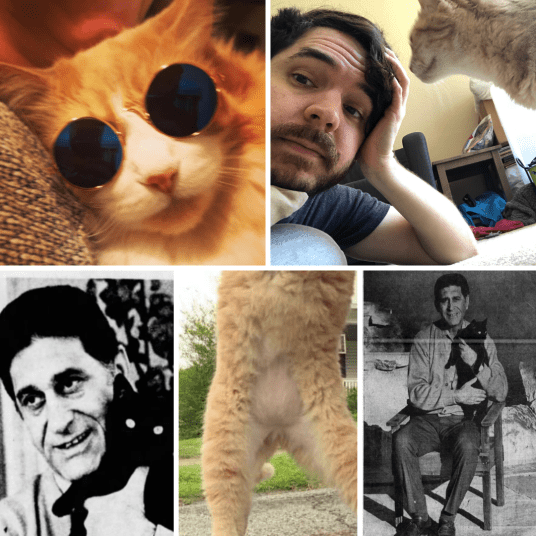 Ep142 Cat Crimes collage