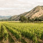 Celebrating 60 Years of Oregon Winemaking: A Tasting of 6 Under-the-Radar Oregon Wines, Wine Casual