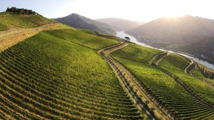 Esporão's Quinto Dos Murças vineyards in the Douro Valley.  Wine Casual