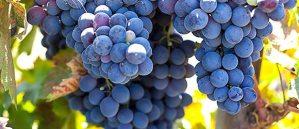 Lodi wine route