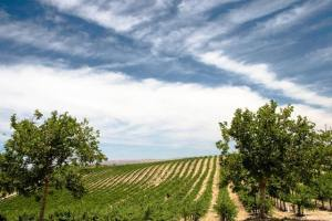 june weather in wine country