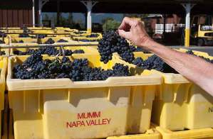 2014 harvest napa valley