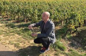 tour guide burgundy