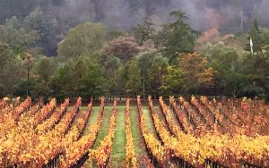 November weather in wine country