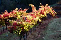 fall autumn wine country