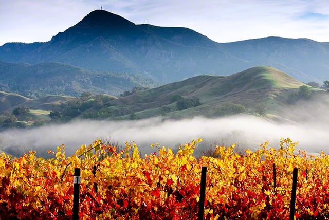 fall colors in wine country