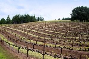 Mariah vineyards mendocino ridge