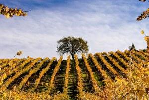 Joseph Family Vineyards - Alexander Valley