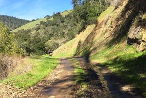 Madrone Trail at Moore Creek Park