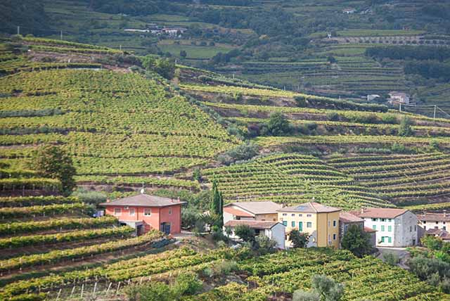 Soave Wine Country
