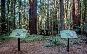 Montgomery Woods State Natural Preserve