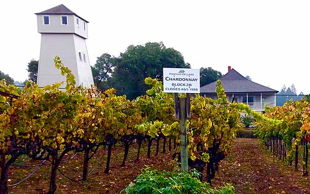 Handley Cellars - Organic Vineyards