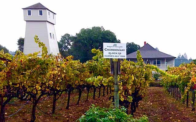 Handley Cellars - Organic Vineyards