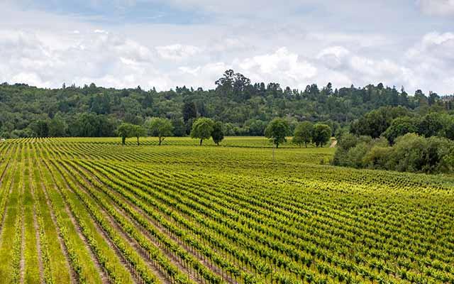 Healdsburg wine country