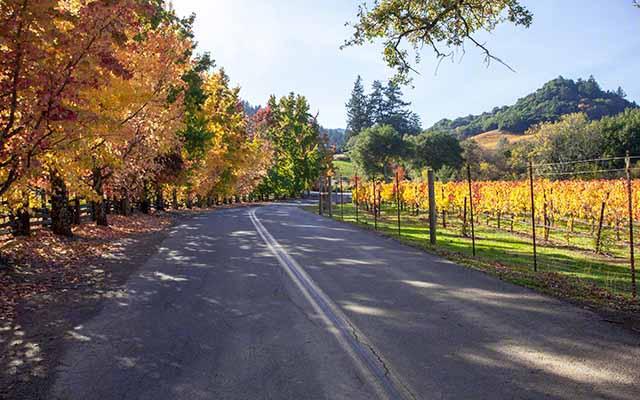 Sonoma vs Napa Valley