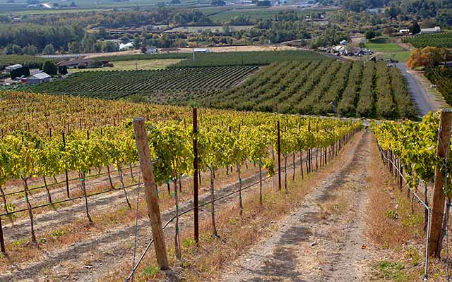 Yakima vineyards in Yakima Valley wine country