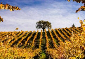 Wine Country Photography for Wine Lovers. Frame it
