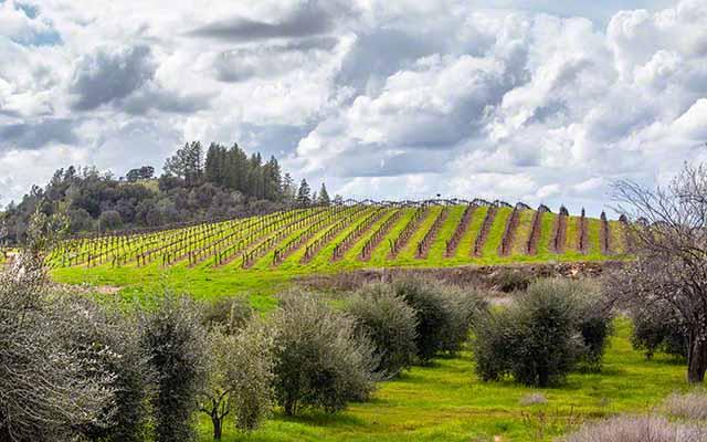 sobon estate winery