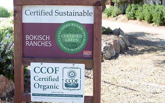 Bokisch Vineyards are organic vines