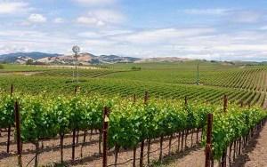 Carneros wine trails