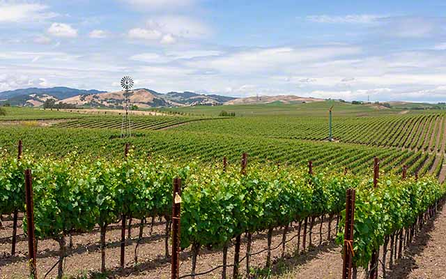 Carneros wine trails