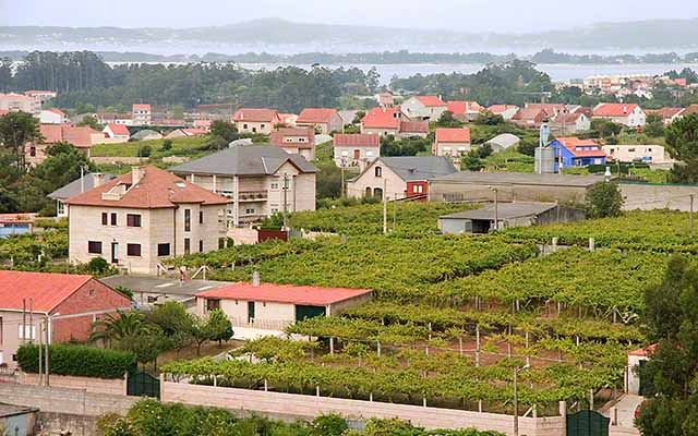 Coastal Cambados - Small plots of vineyards in Albariño