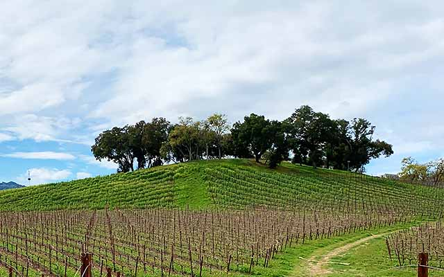 Adelaida Road in Paso Robles wine country