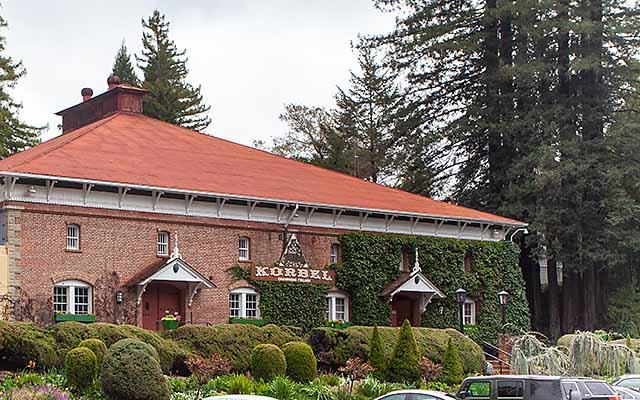redwood trees at Korbel winery