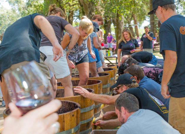 sonoma wineries,  best sonoma wine tours, Sonoma county wine tours,