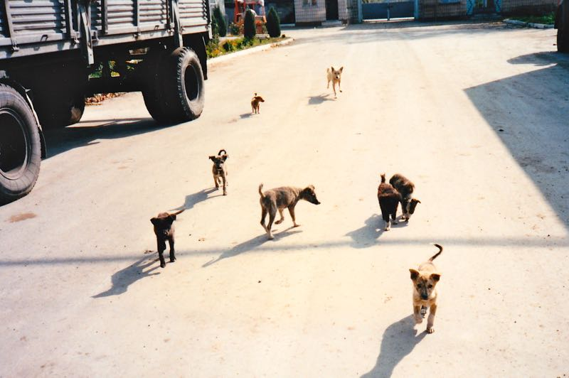 stray-dogs-wander-the-winery-in-moldova-1996-for-wine-decoded-by-paul-kaan