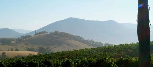 yarra-yering-la-chap-from-top-chard-for-wine-decoded-by-paul-kaan-feature
