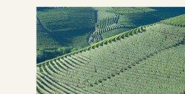 Produttori del Barbaresco Vineyard 2