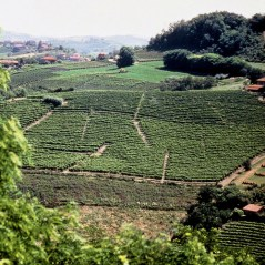 Aldo Conterno Colonnello Vineyard