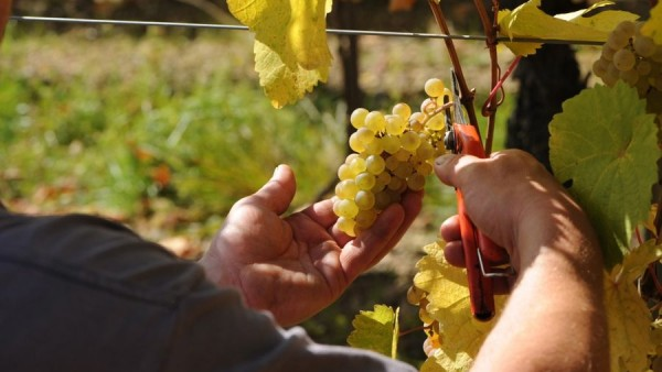 trimbach-photos-18-600x338