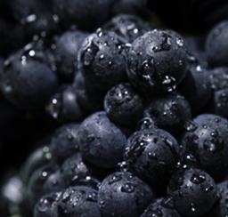 Roederer Vineyard Pinot Noir