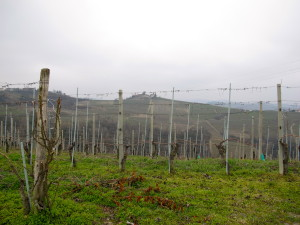 Cloudy Day View of Agriturismo Il Bricco