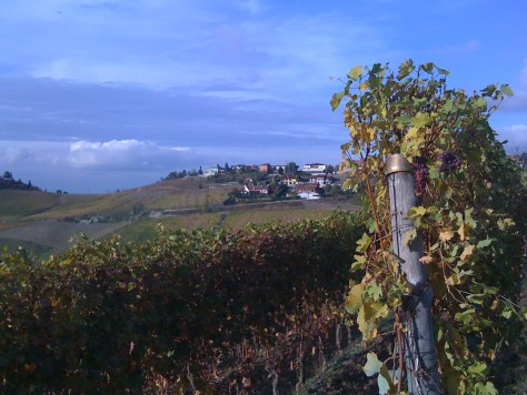The vineyards of Treiso in the Barbaresco denomination in autumn.