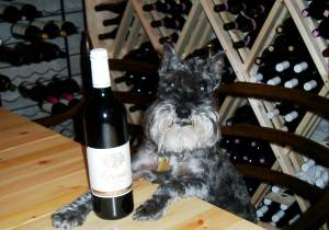Otis the Wine-Loving Dog