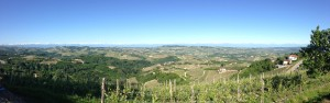Undulating, vineyard covered hills of the Barolo Appellation with the Cottian Alps in the distance.