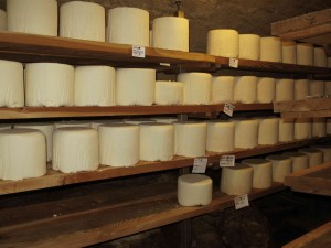 Wheels of fresh Castelmagno d'alpeggio beginning their nine months of aging in Des Martins' cellars.