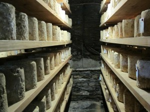 Ripe Castelmagno d'alpeggio ready for sale.