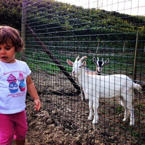 Luciana's granddaughter, Lidia Deltetto, with Luciana's newest addition to her menagerie - goats.