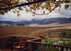MacGregor Vineyards after harvest, 1998