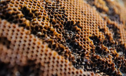 Etruscan Beekeepers Produced Grapevine Honey